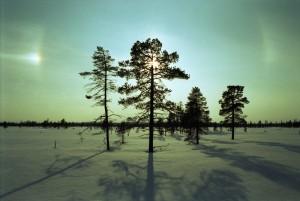 Słońce ze zjawiskiem halo, Muddus NP, styczeń 2010