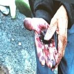 20.Ręce zabarwione koszenilą, barwnikiem z mszyc żerujących na kaktusach