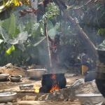 Ghana - Farma oleju palmowego