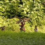 Togo - każdego dnia matki z dziećmi zbierają drewno do gotowania